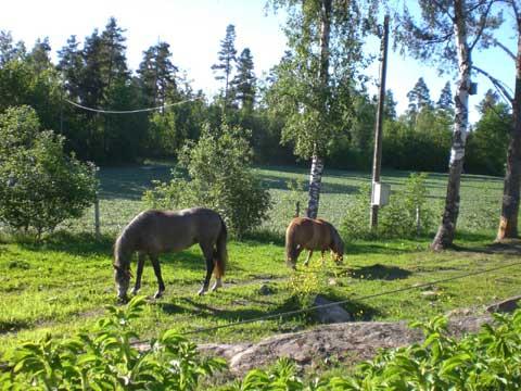 husdjur_hest_90606