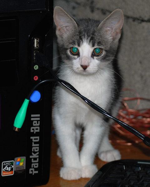 husdjur_katt_90727