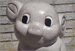 piglets-lop