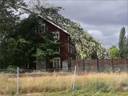 järpåsträd-privat